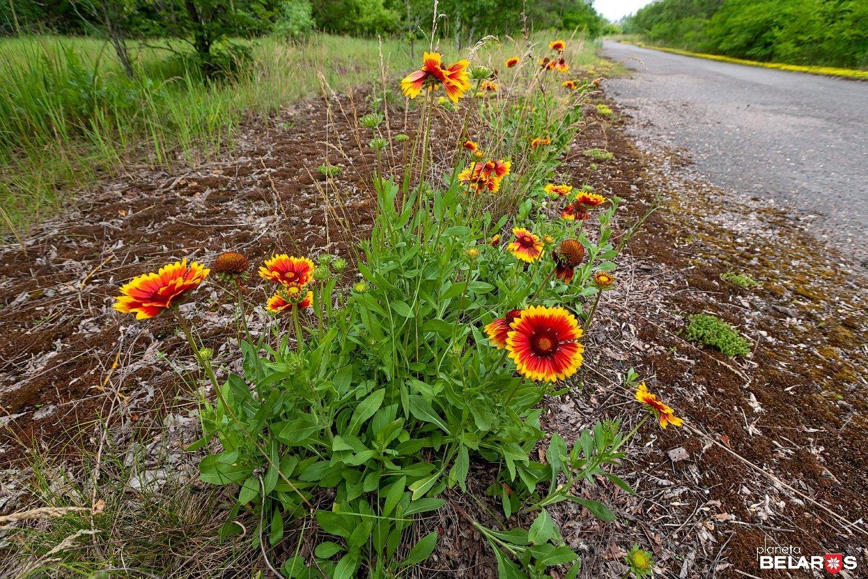 29-2012-06-15_i3_2339pb_1330.jpg