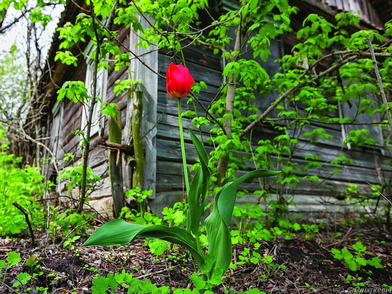 7-2011-05-08_1540_1330.jpg