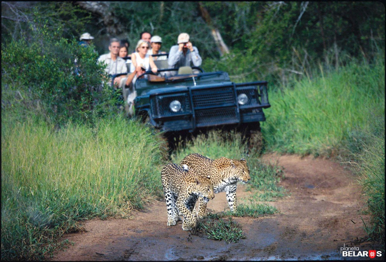 10-Leoparden.jpg